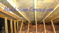 Mould Stains in your attic can loose the sale of your home.