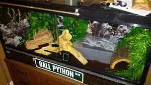 Ball Python and Tank