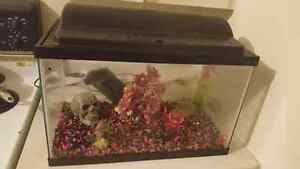 10 gal fish tank and accessories