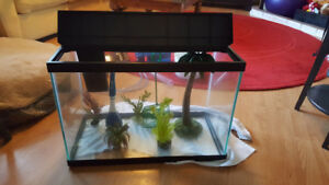 20 Gallon Fish Tank/Accessories