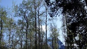 Beautifully treed 1/4 acre lot in New Hazelton, BC