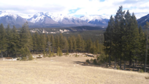 Looking for 2 adult mountain bikes