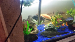 Looking to sell off my cichlids