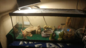 For sale asking $150 Jumbo Lepard Gecko with tank n accessories