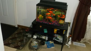 Tetra Aquariam 20 gallon with stand, 8 goldfish and accessories