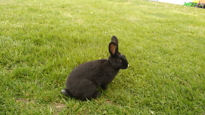 young friendly male rabbit and a full grown male rabbit