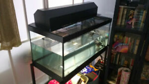 """36"""" Multi Lightbulb Canopy + 40 Gallon fitted lid ONLY"""