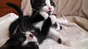 Ready cute and playful kittens