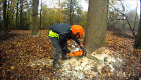 Tree removal & Brush clean up