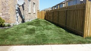 SOD special $1.50/SQFT FLAT RATE & FREE SPRINKLER London Ontario image 2