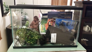 5-gallon fish tank with all you need