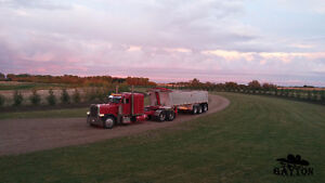 Looking for Peterbilt 379, 388, 389 or Kenworth W900
