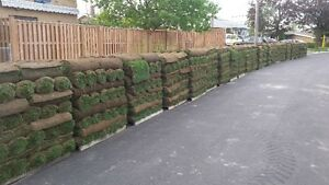 SOD special $1.50/SQFT FLAT RATE & FREE SPRINKLER London Ontario image 1