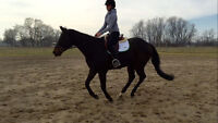 Riding Camp for Horse Lovers