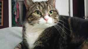 Re homing 3 year old cat