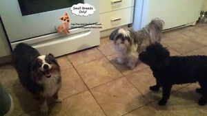 *HOLIDAYS FULL* Sleepovers for small dogs in home of trainer West Island Greater Montréal image 7
