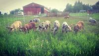 Pasture Raised Specialty Cut Pork Boxes