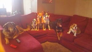Dog Sitter in SW Calgary - Available Anytime