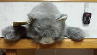 Avanti British Shorthair Tabby Cat/Adult Collection/With Tags
