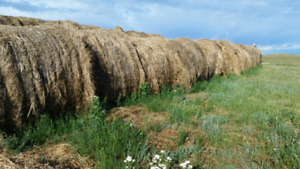 Large rounds hay
