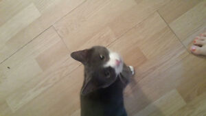 free kitten to give ..located in bouctouche