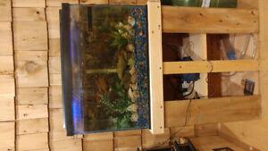 20 gallon fish/reptile Aquarium