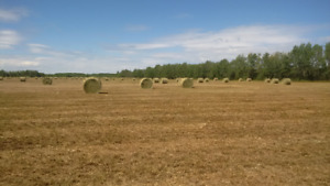 150 acres of Fertile Farmland For Sale