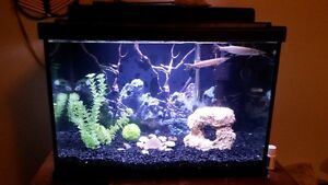hujeta gar pike 50.00 for fish, 130 for fish and tank or OBO
