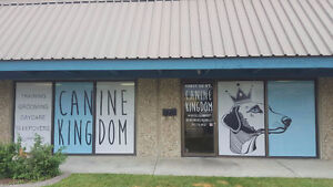 Canine Kingdom Dog Daycare & Boarding