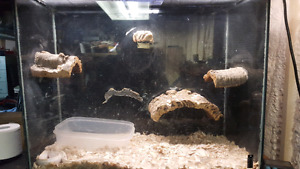 Reptile tank and light