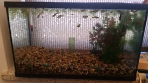 10 Gallon fish tank including fish