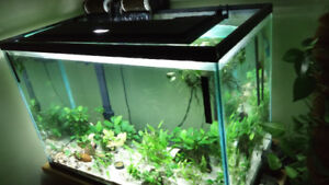 Running Tropical Freshwater Fish Tank with Everything !
