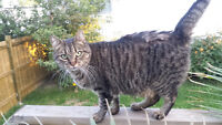 friendly spayed female to adopt