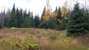 Buy the timber, get 80 acres free! Prince George British Columbia image 3