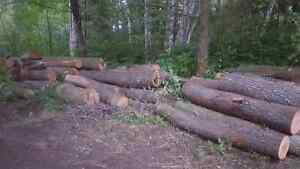 Firewood cherry hardwood logs for sale