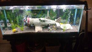 Belle grosse aquarium