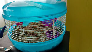Dwarf hamster, cage, and supplies