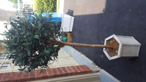 Decorative plant . $25. or your best offer
