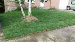 SOD special $1.50/SQFT FLAT RATE & FREE SPRINKLER London Ontario image 4