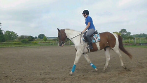 Paint gelding with show miles for part board