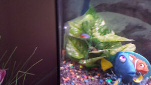 Have 5 fish to give away