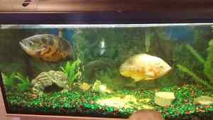 3fish for sale