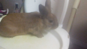 Wascally wabbit for sale urgent