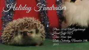 Animal Rescue Holiday Fundraiser