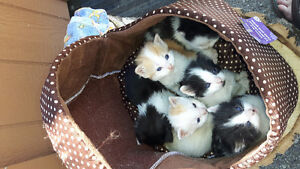 Kittens..free to good home