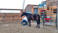 Christian Faith Retreats and Equine Wellness/Education