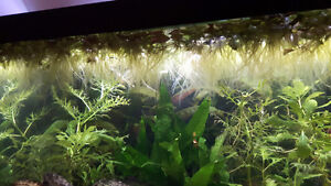 Selling floating plants