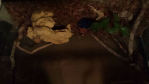 3 crested gecko's