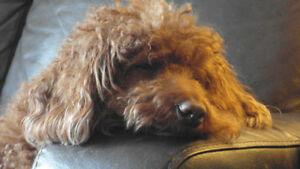 DOG BOARDING/SITTING/WALKING/CAT/PUP VISIT - Oak/Burl