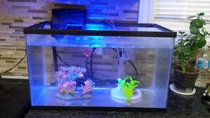 10 Gallon fish tank w/ Accessories